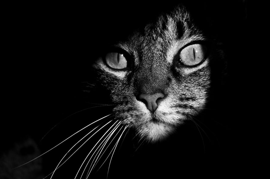 cat-looking-at-you-black-and-white-photography-4.jpg